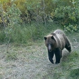 How to Survive a Bear Attack?